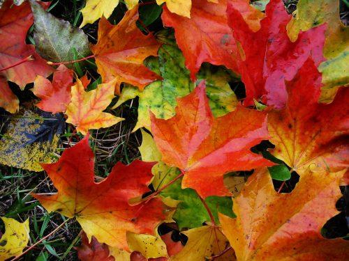foglie autunnali