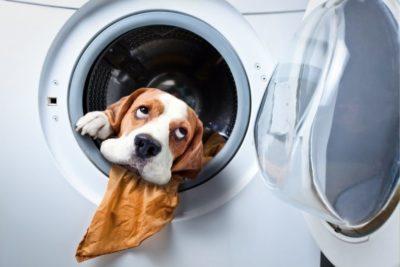 cane nella lavatrice